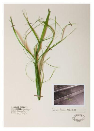 Alberto Baraya, 'Expedition Shanghai: Herbarium of Artificial Plants, Pasto Xie Tu Road', 2012
