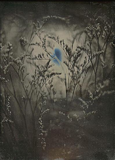 Jerry Spagnoli, 'Botanical Study', 2001/2001