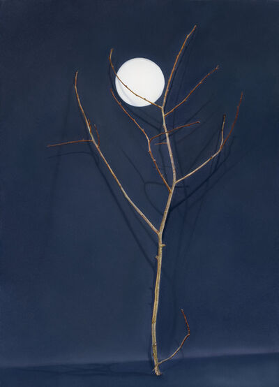 Claire Kerr, 'Tree with Cut-out Moon', 2016