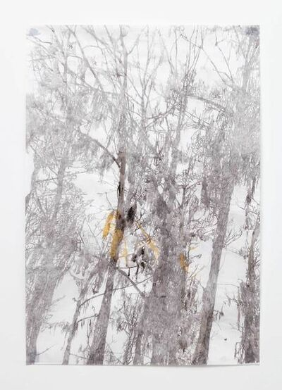 Anne Allen, 'Big Cypress IA', 2013