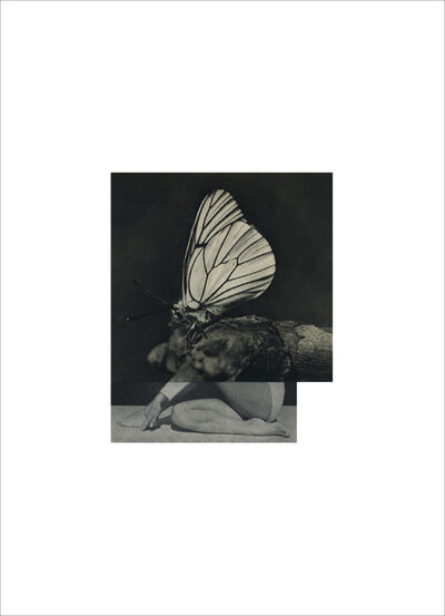 Cecilia Bonilla, 'Between Animals and Trees 12', 2020