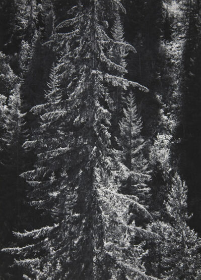 Ansel Adams, 'Park Creek Forest Into Sun, [Northwest] 4-NW-30, [North Cascades National Park], CA', 1958