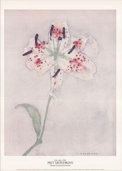 Piet Mondrian, 'Lily', 1996