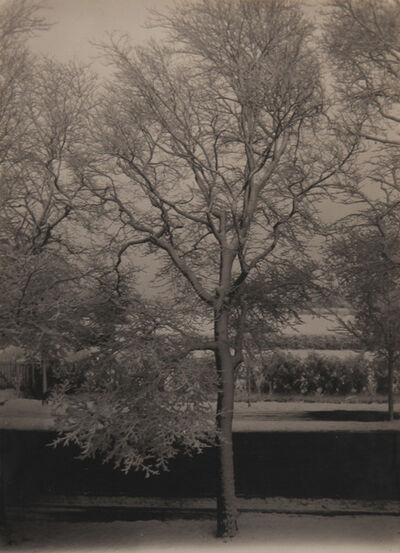 Piet Zwart, 'Tree'