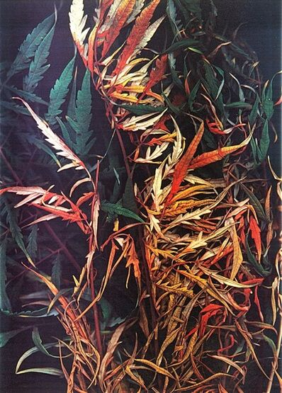 Ken Damy, 'Autunno', 1985