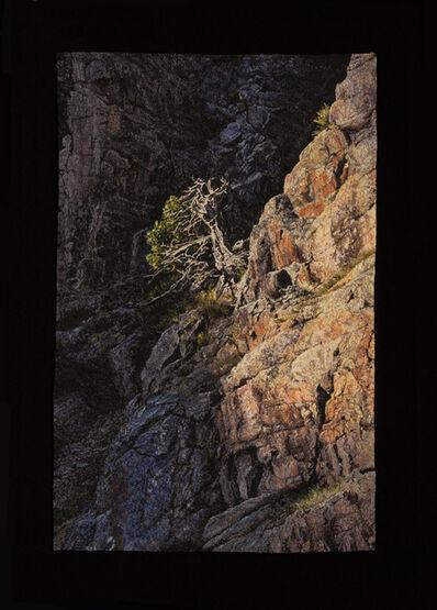 Carol Shinn, 'Tree in the Canyon', 2019