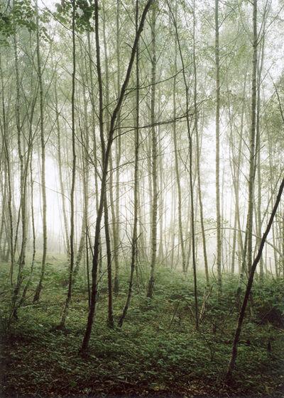 Jitka Hanzlová, 'Forest #36, Untitled (Audience)', 2003