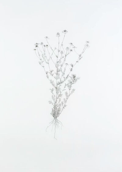 Michael Landy, 'Scentless Mayweed', 2003