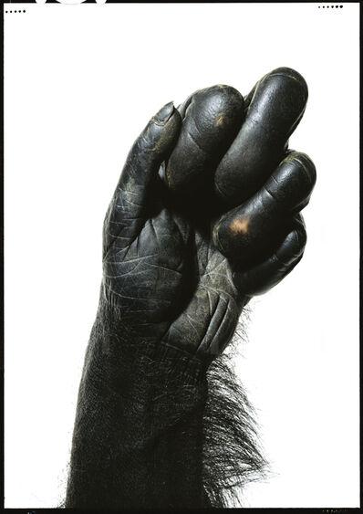 Robert Clark, 'Ape Hand', 2017