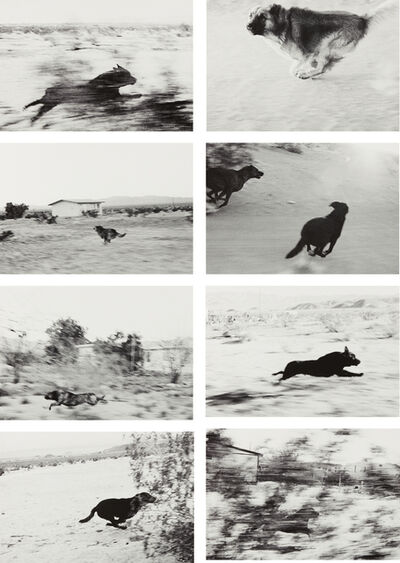 John Divola, 'Selected Images from Dogs Chasing My Car in the Desert', 1996-2000