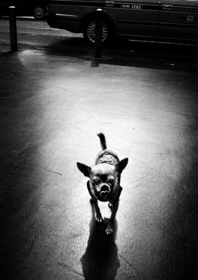 Jacob Aue Sobol, 'Dog (Tokyo)', 2007