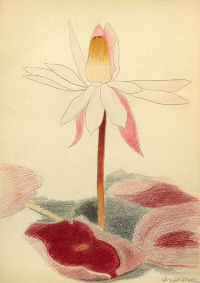 Joseph Stella, 'Water Lily Blossom', ca. 1925