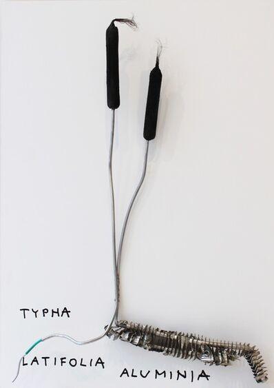 Kristof Kintera, 'Typha Latofolia Aluminia', 2017