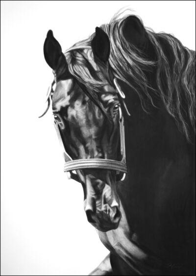Virginia Fifield, 'Black Horse ', 2014