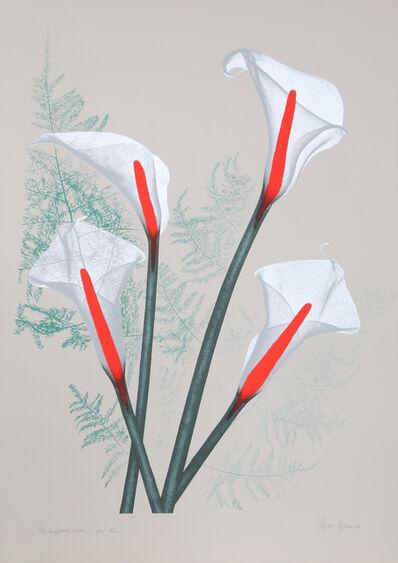Agnes Denes, 'Calla Lily', 1980