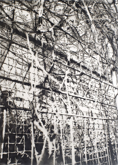Clemens Wolf, 'Plant vs Fence Part I', 2014