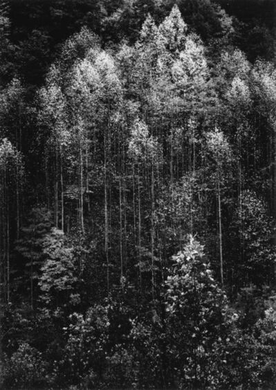 Ansel Adams, 'Dawn, Autumn Forest, Great Smoky Mountains National Park, Tennessee'