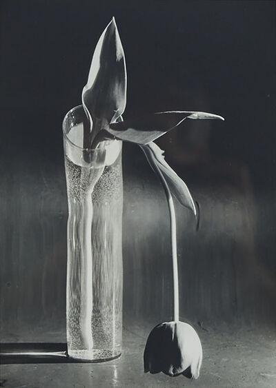 André Kertész, 'Melancholic Tulip', 1939-printed circa 1970