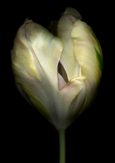 Bob Francis, 'Tulip'
