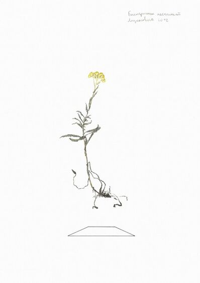 Ilya Dolgov, 'From the Herbarium series ', 2015