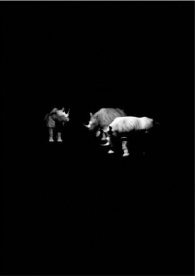 Kerem Ozan Bayraktar, 'Three Rhinos', 2015