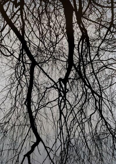 Kong Sung-Hun, 'Willow Tree 2', 2015