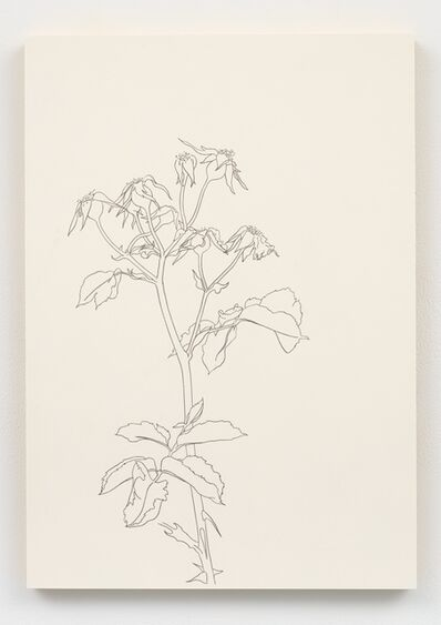 Caitlin Keogh, 'Roses #10', 2019