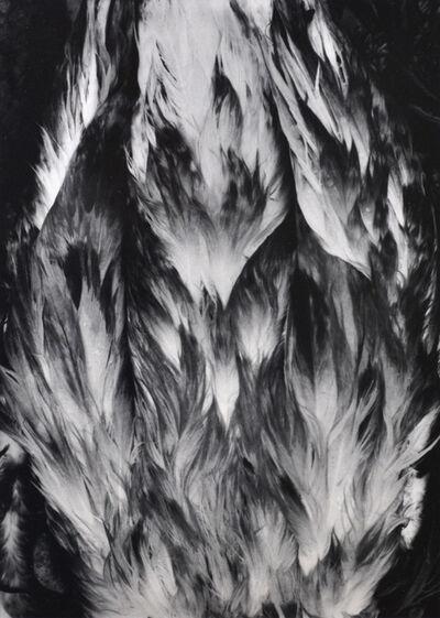 Paul Caponigro, 'Feathers, Nahant, Massachusetts', 1963