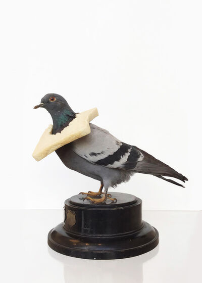 Nancy Fouts, 'Pigeon with Bread', 2011