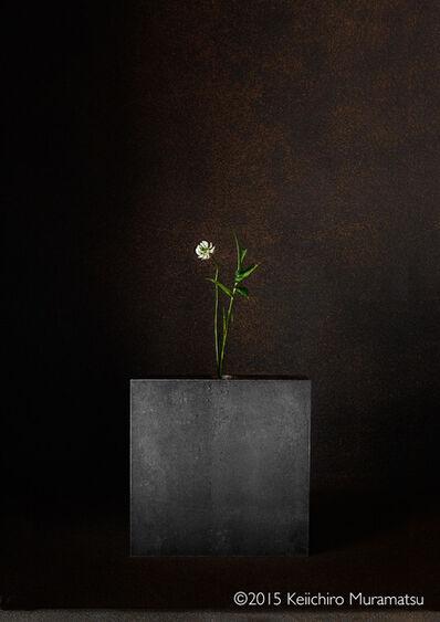 Keiichirô Muramatsu, 'A Stage White Clover 2-3'