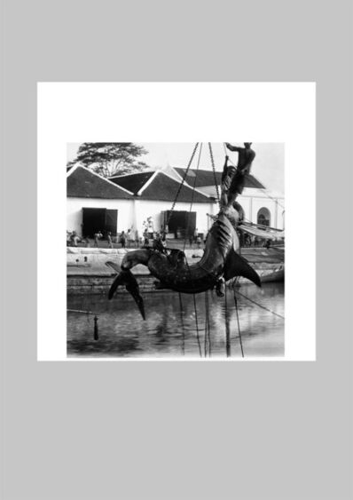 Robert Zhao Renhui, 'Animals of the Dutch Colony', 2013