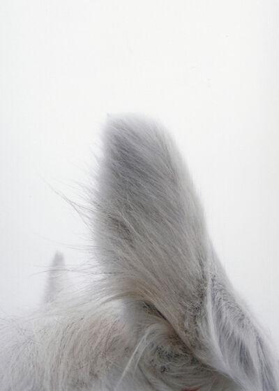 Jitka Hanzlová, '#5 Untitled (Ears / Usi) from HORSE 2007-2014', 2011