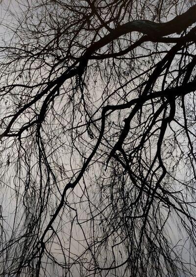 Kong Sung-Hun, 'Willow Tree 1', 2015