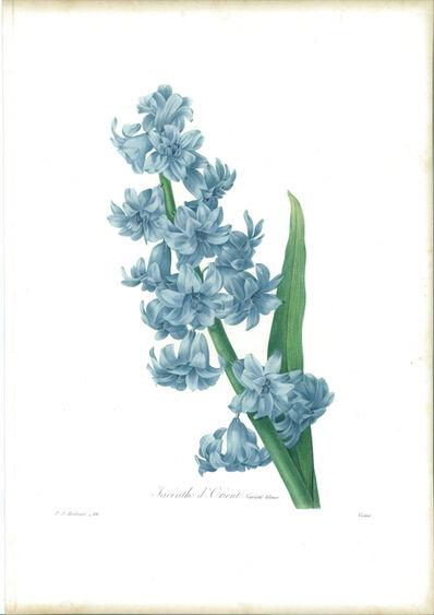 Pierre Joseph Redouté, 'Jacinthe d'orient (variété bleue)', 1827
