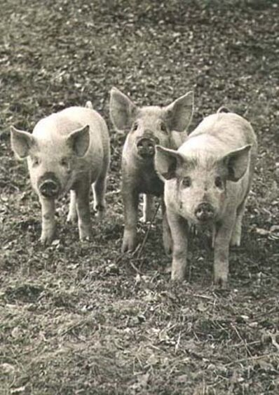 Wolfgang Suschitzky, 'Three Little Pigs', 1939