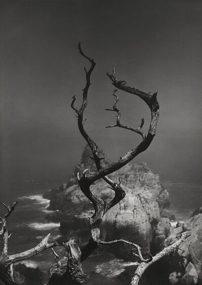 Minor White, 'Twisted Tree, Point Lobos, CA, 1950', 1950