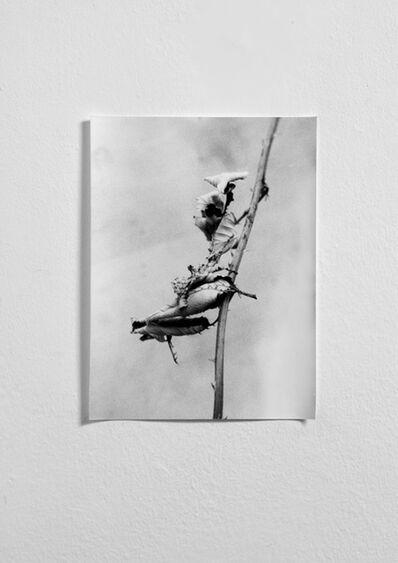 Jochen Lempert, 'Phasmid 1', 2013