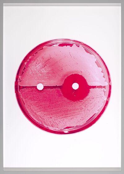 Elva Mulchrone, 'In Hot Pink ', 2020