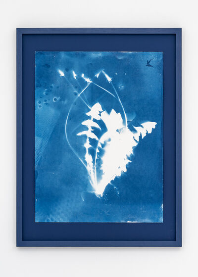 Tue Greenfort, 'Dandelion (Taraxacum)', 2021