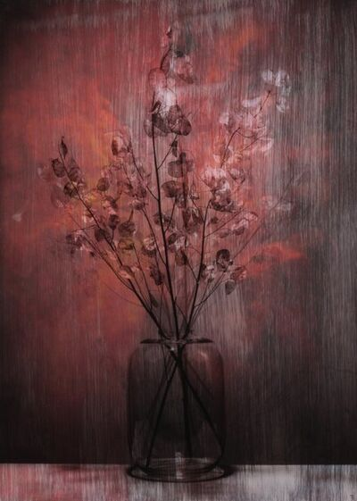 Titus Brein, 'Silver Kush'