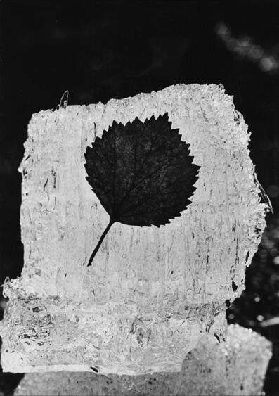 Mario De Biasi, 'Untitled (Leaf on ice)', anni 1970