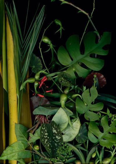 Luzia Simons, 'Jardim 11', 2014