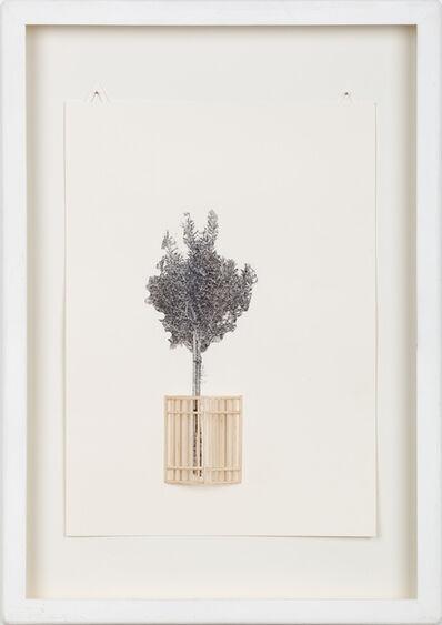 Kata Tranker, 'Small-tree-fence', 2016