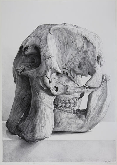 Claudio Bravo, 'Craneo de elefante (elephant skull)', 2008