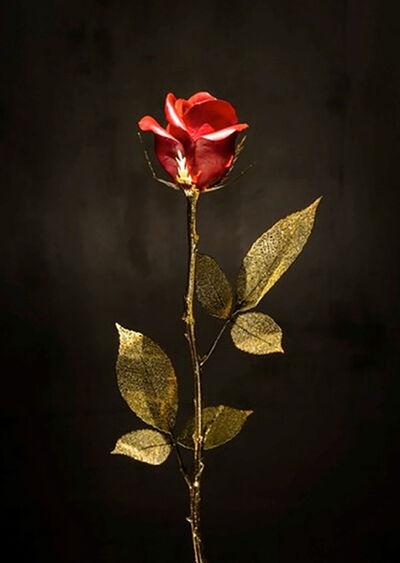 Huang Yulong 黄玉龙, 'Red/Gold Rose 玫瑰花 - 金/红', 2015