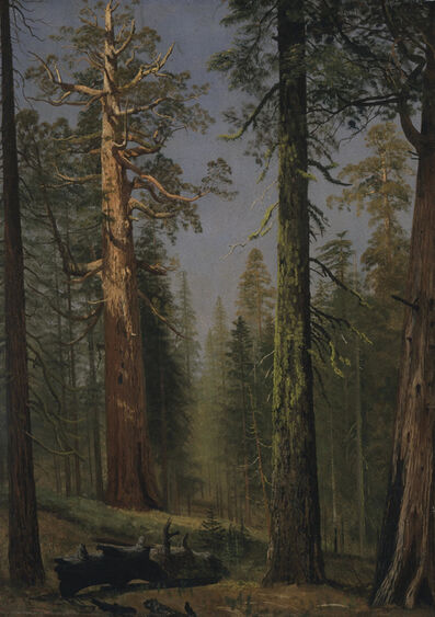 Albert Bierstadt, 'The Grizzly Giant Sequoia, Mariposa Grove, California', ca. 1872-1873