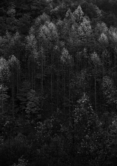 Ansel Adams, 'Dawn, Autumn Forest, Great Smoky Mountains National Park, Tennessee', 1948