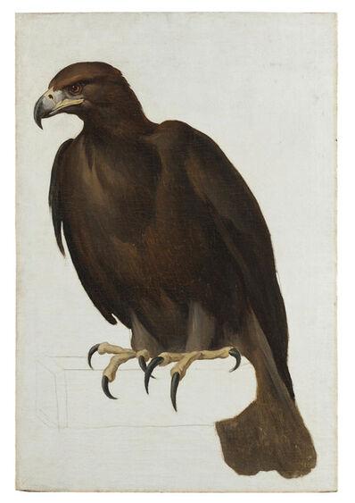 Vincenzo Camuccini, 'Eagle', ca. 1805-1807