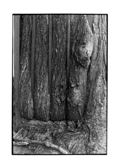 Zoe Leonard, 'Tree + Fence, E. 6th St. (close-up)', 1998/1999