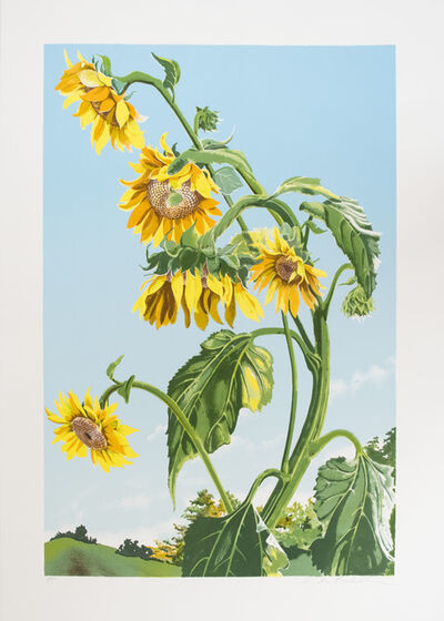 Sondra Freckelton, 'Sunflowers (State I)', 1980